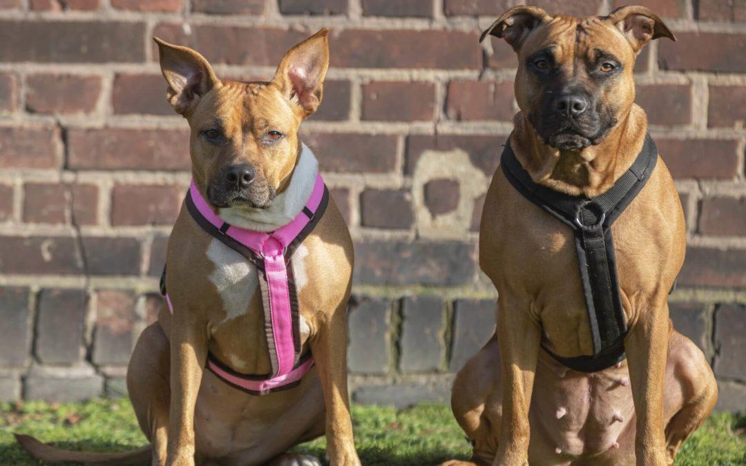 Du wünschst Dir einen Listenhund? Ein Überblick über die wichtigsten Infos!